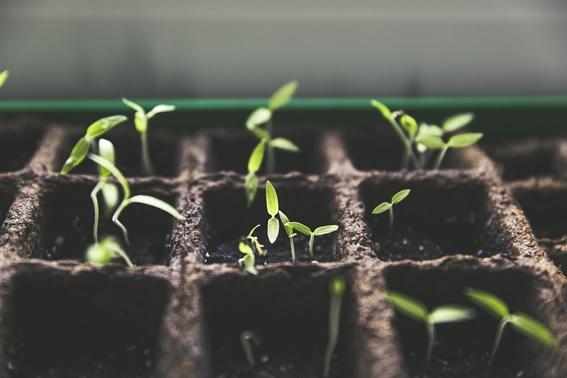 Diferentes Tipos De Armarios De Cultivo Para Huertos Urbanos